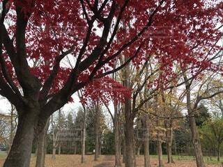 秋の散歩道の写真・画像素材[3864617]