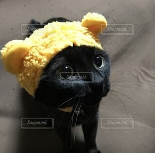 黄色のふわふわ帽子ねこの写真・画像素材[3982278]