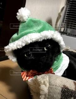 クリスマスの帽子を被せられたねこの写真・画像素材[3982283]