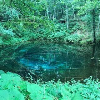 神の子池の写真・画像素材[4132994]