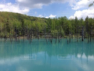 美瑛の青い池の写真・画像素材[4133519]