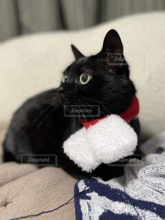 赤いマフラー巻いた猫の写真・画像素材[4192280]