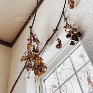 ドライフラワーの花束の写真・画像素材[4222754]