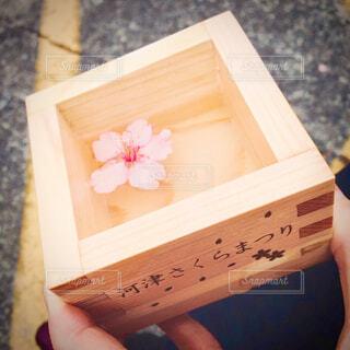 桜まつりオリジナルの枡酒の写真・画像素材[4326699]