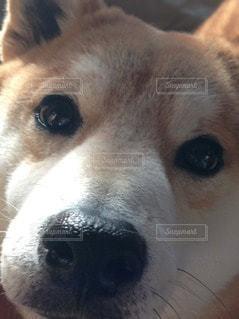 犬の写真・画像素材[31976]