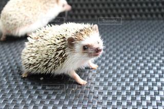 小さな茶色の動物の写真・画像素材[973329]