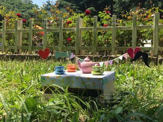 公園,春,緑,樹木,ピクニック,休日,お出かけ,お茶会