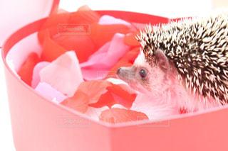 ピンク色の花でいっぱいのボックスの写真・画像素材[1112585]