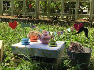 ピクニック用のテーブルに座っているハリネズミの写真・画像素材[1158224]