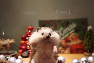 サンタクロースもびっくりなハリネズミの写真・画像素材[1158713]