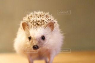 小さな茶色の動物の写真・画像素材[1196996]