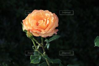 近くの花のアップの写真・画像素材[1197011]