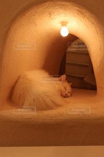ベッドの上に座っている猫の写真・画像素材[1216924]