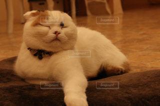 近くに猫のアップの写真・画像素材[1216927]
