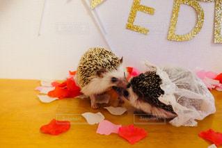 ハリネズミ の結婚式の写真・画像素材[1228919]