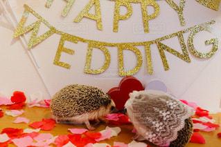 ハリネズミ の結婚式の写真・画像素材[1228925]