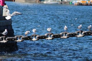 水の体の上に座っている鳥の群れの写真・画像素材[1247780]
