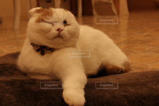 茶色と白猫がテーブルに座っての写真・画像素材[1254819]