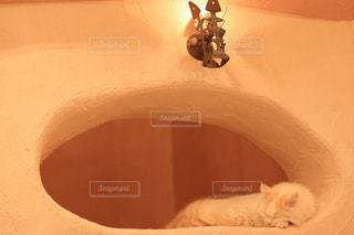 地面に横になっているオレンジと白猫の写真・画像素材[1254839]