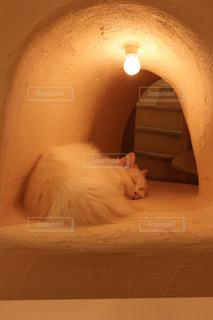 ベッドの上に座っている猫の写真・画像素材[1254851]