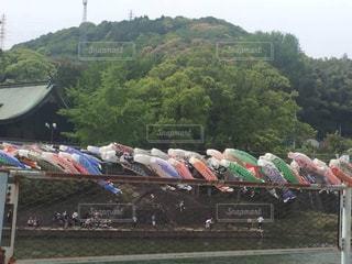 川上峡を流れる鯉のぼりの写真・画像素材[1407841]