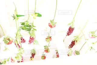 テーブルの上の花の花瓶の写真・画像素材[1595518]