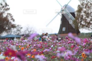 近くの花のアップの写真・画像素材[1598333]