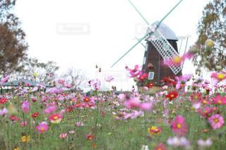 近くの花のアップの写真・画像素材[1598337]