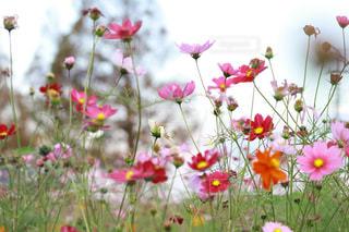 テーブルの上の花の花瓶の写真・画像素材[1598341]