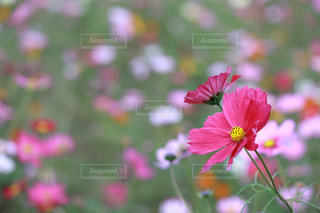 近くの花のアップの写真・画像素材[1598343]