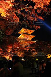 清水寺のライトアップの写真・画像素材[1666318]