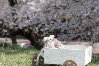 木製の乗り物に入ってお花見するハリネズミの写真・画像素材[1832567]
