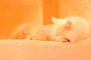猫,昼寝,ねこ,眠る,白猫,暖かい,猫カフェ,ゆったり,ほのぼの,ネコ,柔らか,ミルクティー色,柔らかい色,暖かい色合い