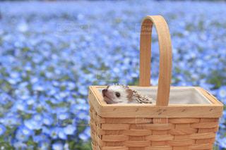 花の写真・画像素材[2035502]