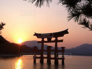 厳島神社のサンセットの写真・画像素材[969583]