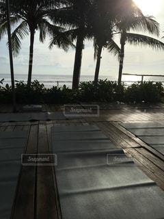 ヤシの木の横にある空の公園ベンチの写真・画像素材[978128]