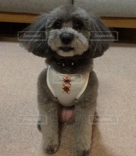笑う犬の写真・画像素材[982300]