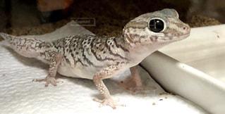近くに爬虫類のアップの写真・画像素材[974692]