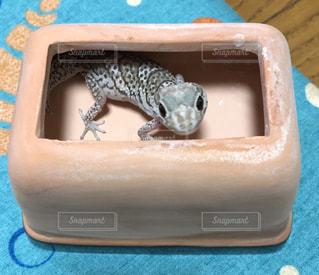 プラスチック容器に座っている猫の写真・画像素材[974700]
