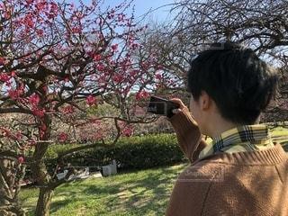 花,春,社会人,梅,大学生,快晴,デート,万博記念公園,美男,散歩日和
