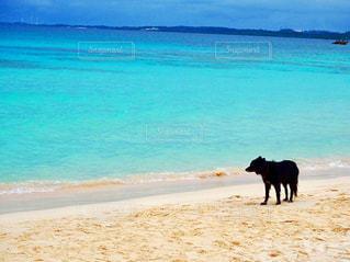 海をみつめる犬の写真・画像素材[975473]