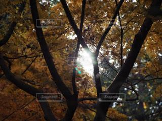 空,秋,紅葉,太陽,黄色,日差し,秋空,太陽の光,フォトジェニック