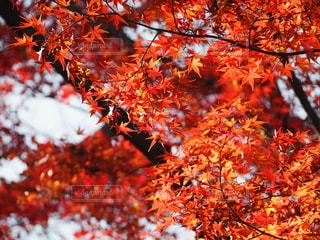 風景,空,秋,紅葉,赤,オレンジ,秋空,暖色,三渓園