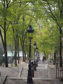 自然,風景,街並み,海外,散歩,ヨーロッパ,観光,旅行,フランス,パリ,街灯,朝,海外旅行
