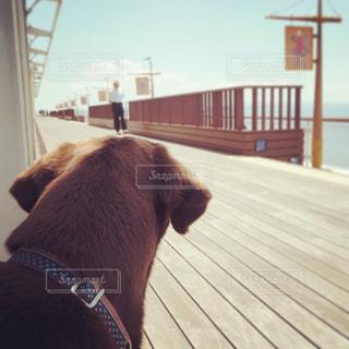 犬,空,動物,かわいい,青,後ろ姿,散歩,茶色,ペット,後姿,男の子,愛犬,お散歩,見つめる,オス,大型犬,海ほたる,背後,探す,ラブラドールレトリバー