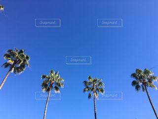 自然,海,空,アメリカ,観光,旅行,LA,ロサンゼルス,海外旅行,カルフォルニア