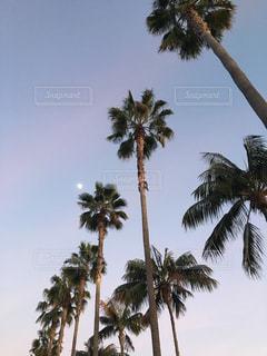 空,夕日,アメリカ,ヤシの木,LA,ロサンゼルス,海外旅行,夕やけ