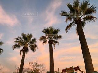 自然,空,夕焼け,LA,ロサンゼルス,海外旅行,ディズニー,カルフォルニア