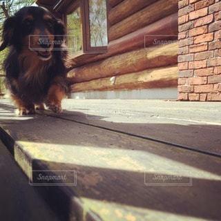 犬の写真・画像素材[32352]