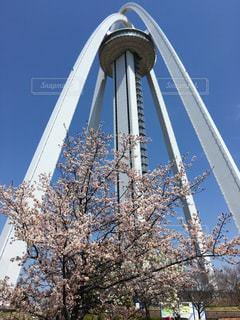 桜,一宮市,138タワー,4月,2017年